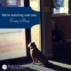 Yes, we proudly protect all of our customers, and Max is watching over you! #puggle #officedog #puglife