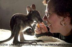 Dieses kleine Kangaroo Baby bekommt eine Verwöhnmassage und fühlt sich wunderbar dabei (Video) - BuzzerStar  Interessante Neuigkeiten aus der Welt auf BuzzerStar.com : BuzzerStar News - http://www.buzzerstar.com/dieses-kleine-kangaroo-baby-bekommt-eine-verwoehnmassage-und-fuehlt-sich-wunderbar-dabei-video-0e51a0157.html