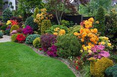 Side border late spring azalea flowers | Flickr - Photo Sharing!