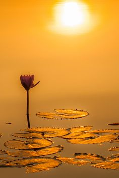The Perfect World. Lily Pond, Water Lilies, Mellow Yellow, Amazing Nature, Beautiful World, Nature Photography, Sunrise, Beautiful Pictures, Scenery