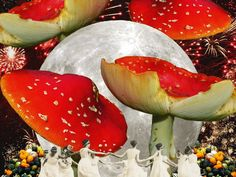 Samhain: a Modern Witch's Guide - Restless Network Modern Witch, Altered Images, Samhain, Watermelon, Fruit, Beautiful