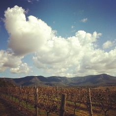 Great pic of the vineyard at Scarborough in the Hunter Valley.