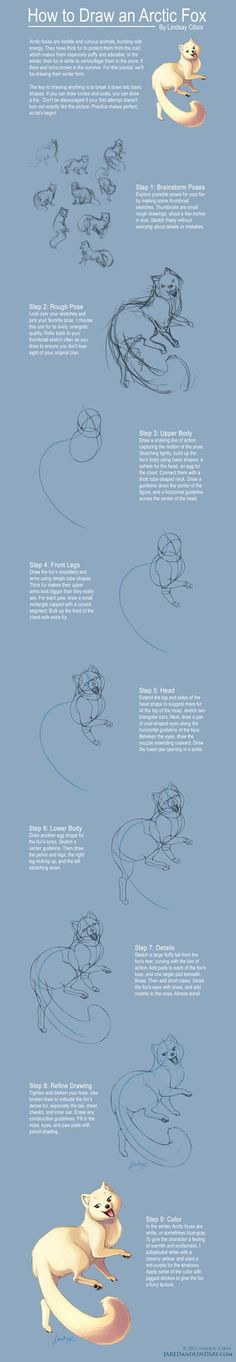 How to Draw an Arctic Fox by LCibos on DeviantArt