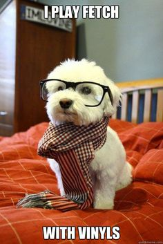 hipster dawg
