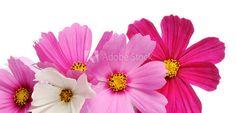 beautiful flowers - image | Adobe Stock