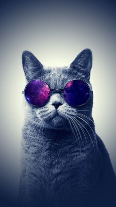 This cat is badass cat wallpaper, hipster phone wallpaper, galaxy wallpaper iphone, walpaper Wallpaper Gatos, Cat Wallpaper, Mobile Wallpaper, Wallpaper Backgrounds, Anchor Wallpaper, Amazing Wallpaper, Hipster Phone Wallpaper, Galaxy Wallpaper Iphone, Whatsapp Wallpapers Hd