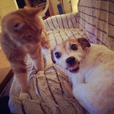 Cats and dogs are the best of enemies – 30 Pics #catanddog