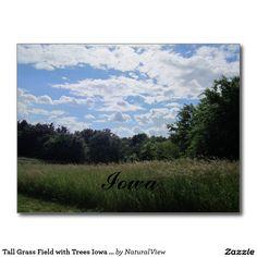 Tall Grass Field with Trees Iowa Postcard