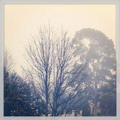 241/365 Foggy Friday