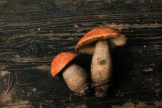 Finnish mushrooms.
