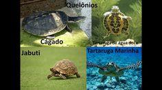 Diferenciação entre Jabuti, Cágado e Tartarugas