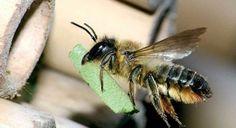 Диви пчели строят кошерите си с пластмаса и найлон