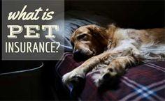 Sick dog laying on sofa
