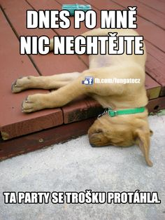 Dnes po mně nic nechtějte... Jokes Quotes, Memes, Cute Dogs, Haha, Celebrities, Funny, Nice, Animal Pictures, Celebs