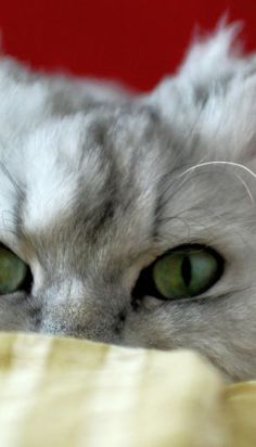 The 344 Best CAT EYES Images On Pinterest