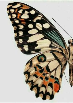 Butterfly illustration or painting / Collections of Objects / Collections of Things / Displaying / Vintage / Ideas / Nature / Antique Art Papillon, Jolie Photo, Butterfly Wings, Butterfly Pattern, Butterfly Colors, Butterfly Background, Orange Butterfly, Butterfly Painting, Madame Butterfly