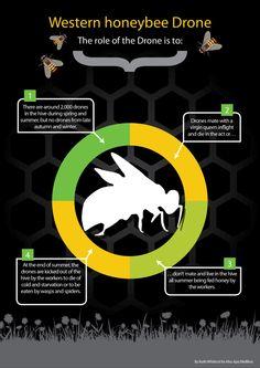 BBKA module 6 honeybee behaviour: Social organisation of a honeybee colony and worker policing