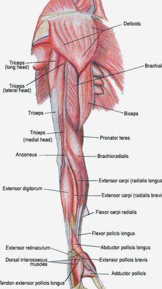 Unlock Your Hip Flexors: HumanampAnimal Anatomy and Physiology ...
