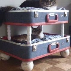 DIY Creative bunk beds | creative cat bed:) | DIY Projects for the Home