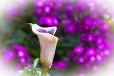 by Heikki Rantala Flower Power, Gardening, Bird, Flowers, Fun, Animals, Animales, Animaux, Lawn And Garden