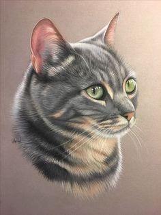 Portrait de chat gris au pastel, portrait animalier