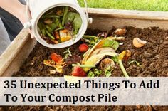 Not too surprising… 1. Dead Houseplants 2. Fireplace ashes 3. Tea Bags and Coffee grounds (including the filters) 4. Seaweed and Kelp 5. Stale Bread and other grain products 6. Eggshells (here are six more ways to use eggshells in your garden) 7. Used paper towels and napkins 8. Paper grocery bags (balled up or ripped in pieces) 9. Dirt and grime of the bottom…   [read more]