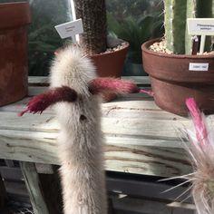 """""""She said whaaat?"""" Cactus talk"""