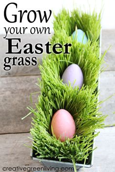 How to Grow Your Own Edible Easter Grass Learn how to grow edible Easter basket grass at home! This easy wheat berry grass growing project can also be used for juicing or animal fodder year round! Easter Crafts, Holiday Crafts, Easter Ideas, Spring Crafts, Holiday Ideas, Edible Easter Grass, Grass Centerpiece, Centerpieces, Growing Wheat Grass