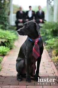 Cool dog photo with groom and groomsman - Man's Best friend has to find a spot in the wedding pictures