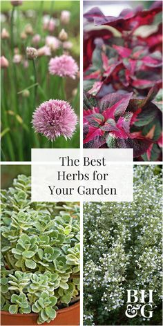 Skip the store-bought variety and add edible plants to your garden by growing herbs. Find the best herbs for your indoor or outdoor garden and successfully grow them with our helpful guide.#herbs #growyourownfood #gardening