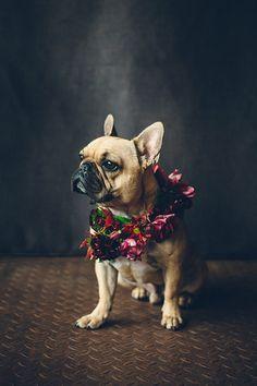 French-bulldog-floral-crown
