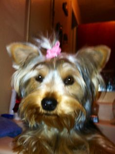Guinevere having a bad hair day.... lol