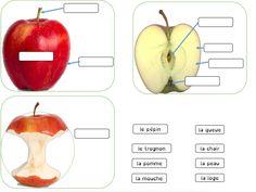 Cahier interactif sur la pomme