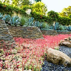 Textural play A curved stone wall plays against dramatically vertical agave franzosinii, while smooth, charcoal-hued stones allow the bright colors and soft lines of dasylirion and echeveria elegans to pop.