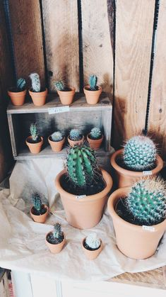 Small cacti pots