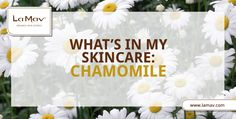 Did you know that chamomile is as soothing for the skin as it is for your body and mind? Learn more with us!