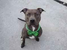 A1100596_Mellow1 to be destroyed 1/09/2017