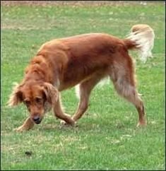 Training a Hyperactive Dog to Calm Down - Whole Dog Journal Article