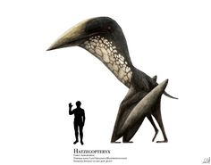 Finally completed my very first digitally-reconstructed pterosaur (and first pterosaur of the giant short-necked azhdarchid Hatzegopteryx. Prehistoric Wildlife, Prehistoric Creatures, Octopus Vulgaris, Jurassic Park World, Dinosaur Art, Extinct Animals, Zoology, Fauna, Creature Design