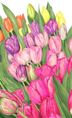 Tulips  Sally Jacobs   WATERCOLOR