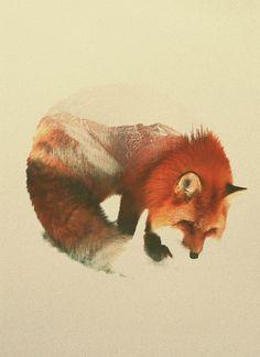 Les photos double exposition animauxpaysages de Andreas Lie  2Tout2Rien