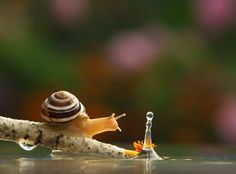 With 25 Magical Photos, This Man Completely Changed Everything I Knew About This Tiny Creature