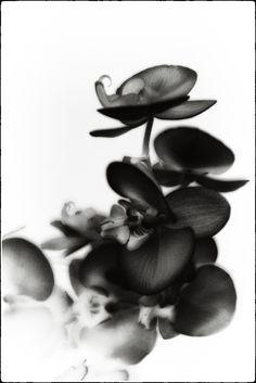 Pictorialism, monocle photo