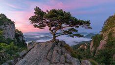 An Old Pine Tree, Daedunsan, South Korea Southern Oregon Coast, Sounds Of Birds, Emperors New Clothes, Nostalgia, Before Sunrise, National Photography, Nature Photography, Landscape Photographers, South Korea