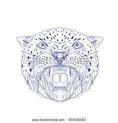Illustration of an Angry Jaguar, panther, leopard, wildcat, big cat Head showing it's Fangs viewed from front done in hand drawn, sketch Drawing style.  #jaguar #drawing #illustration