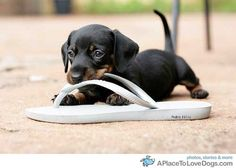 Flip flops are great to nom on!