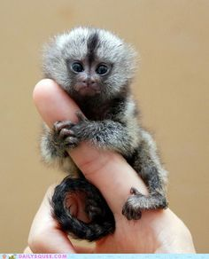 I wanna finger monkey