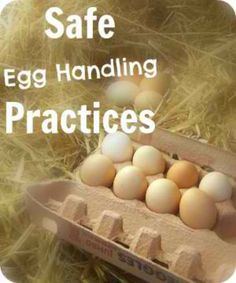 Safe Egg Handling Practices | Are we doing it right? People are passionate about how they choose to store their freshly collected eggs. Do cultural differences play a part in the decision you make? Do new chicken owners with no guide to pass down the skills make different decisions than someone who has a family that raised chickens for years?