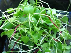 How to grow organic vegetables in less than 60 days - because by then I'll be tired of sprouts!