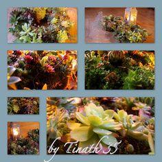 Tinathgarden: Couronnes de succulentes